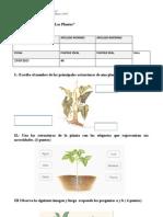 Evaluación Subunidad las plantas 25 de marzo