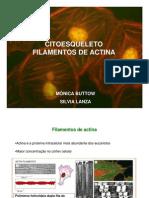 Biotec Sem - Citoesqueleto Actina
