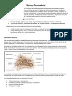 Sistema Respiratorio y Sistema Digestivo