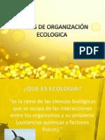 nivelesdeorganizacinecologica-120903220155-phpapp02