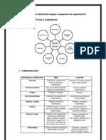 Ejemplos de Esquemas de Organizacion