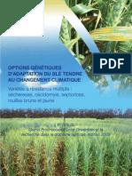 variété resistante blé tendre Jlibene111