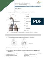 Ficha Sistema Respiratorio - Sintese