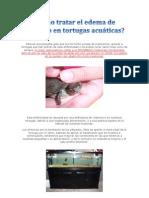 _Como Tratar El Edema de Parpado en Tortugas Acuaticas