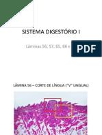 SISTEMA DIGESTÓRIO - LAMINAS