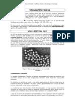 APUNTE virus hepatotropos.pdf