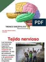 9 Clase Cerebro y Embriologia