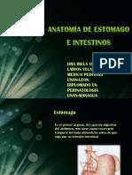 Anatomia Del Aparato Digestivo i