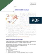 reproduccion_humana.pdf