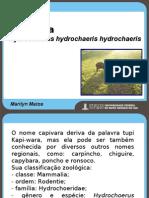 Capivaras