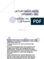 SEL1prokarioteukariotstrukturdanfungsimembransel