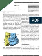 bacterial ribosomes.pdf