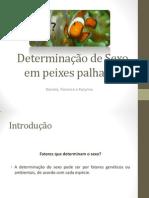 Determinação de Sexo em peixes palhaços