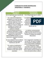 Cuadro Comparativo Entre Respiracion Anaerobica Y Aerobica