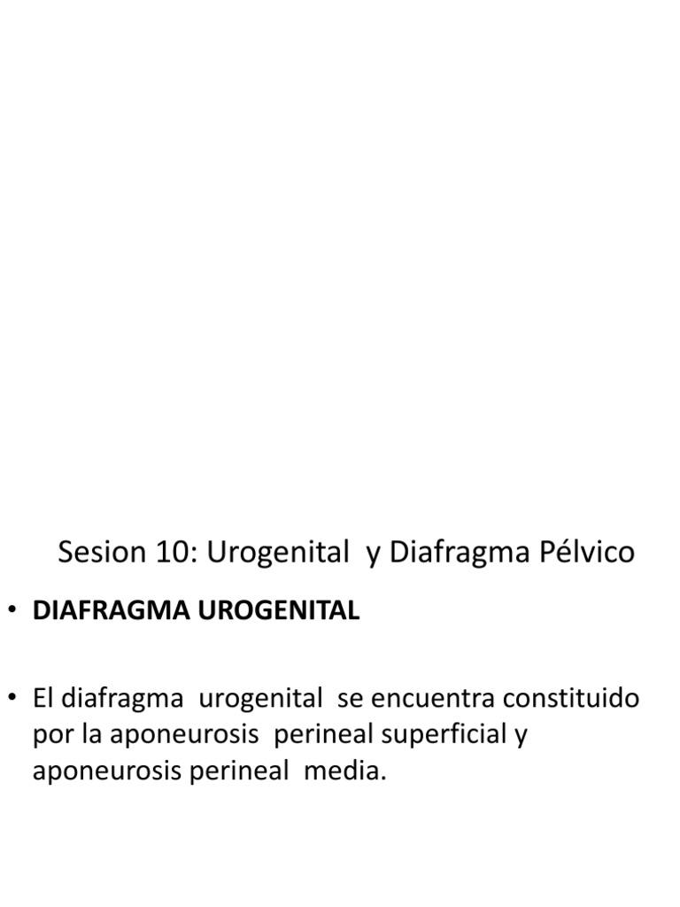 Sesion 10 Anatomia Diafragma Pelvico y Urogenital