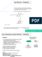 Biosynthesis NP-3 Poliketida