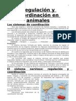 Regulación y coordinación en animales