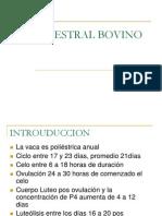 CICLO ESTRAL BOVINO