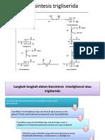 Biosintesis trigliserida