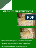 Organos mesentéricos.pdf