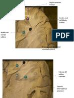 neuroanatomia-practico.pptx