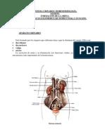 1-Unidad9-Aparato_urinario