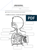 Eva I Sistema Respiratorio 2012