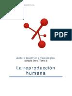 aparato-reproductor_adultos