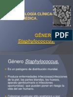 3. Staphylococcus