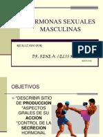 Hormonas Sexuales Masculinas 1209932895904565 8