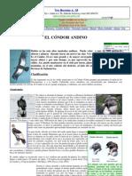Condor Andino - Sereno Guardian de Las Alturas