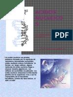 Acidos Nucleicos Power
