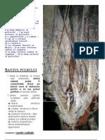 tabachera anatomica santul pulsului