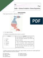 Ficha+de+trabalho+sistema+cardiorespiratório