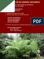 Tema 13b. Monilophyta - marattiopsida - polypodiopsida.pptx
