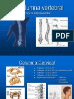 53878679 La Columna Vertebral Posiciones Radiologicas y Anatomia
