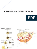 Kehamilan Dan Laktasi Buku Fisiologi