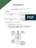Sistema Nervioso Alonso