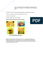 mosca de la fruta.docx