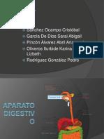 aparatodigestivo-organosyfunciones-120227194211-phpapp01