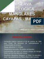 RESERVA ECOLÓGICA MANGLARES CAYAPAS - MATAJE