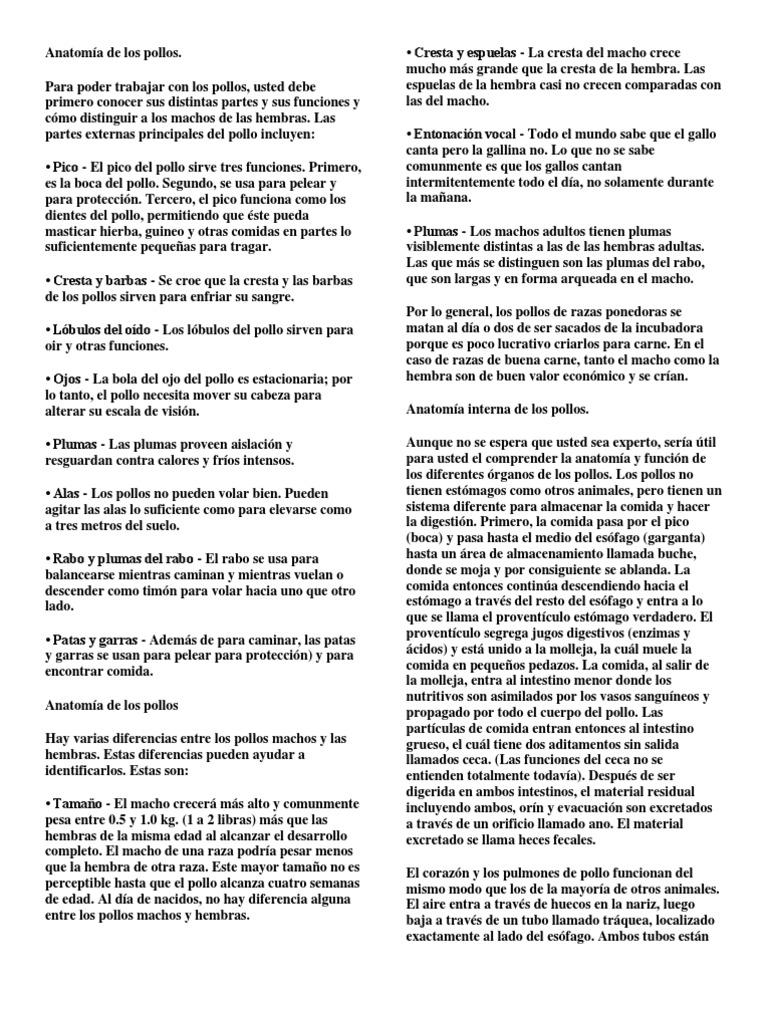 Dorable Anatomía Del Oviducto De Pollo Colección de Imágenes ...