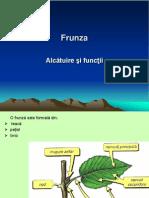 lectie_78_frunza_alcatuire_si_functii..ppt