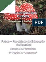 Ciclo de Vida Dos Fungos