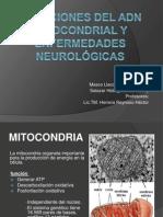 Mutaciones del ADN mitocondrial y en enfermedades neurológicas