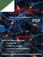 Estructura Microcópica