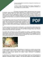 los moluscos son un tipo de metazoos de simetría bilateral numerosísimo.docx