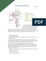 Vascularizacion Del Cerebro