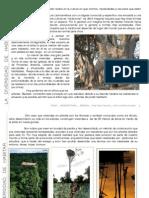 Ensayo_ Arquitectura Sin Arquitectos_ Cynthia Franjola