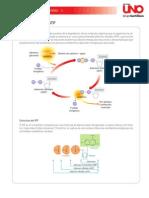 La molécula de ATP
